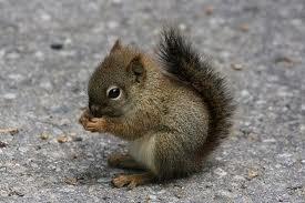 ceci est le alt d'un bébé écureuil